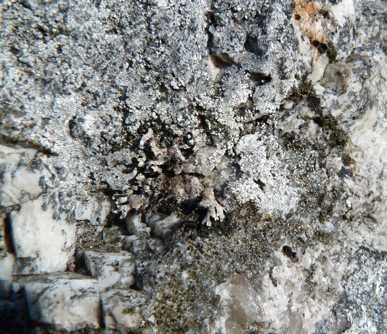 Dartmoor Rock Wall 11