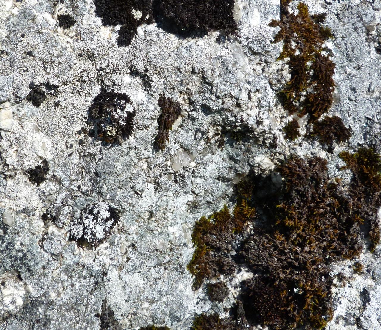 Dartmoor Rock Wall 2