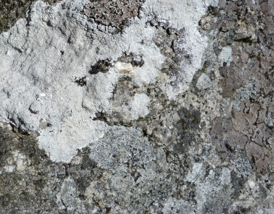 Dartmoor Rock Wall 4