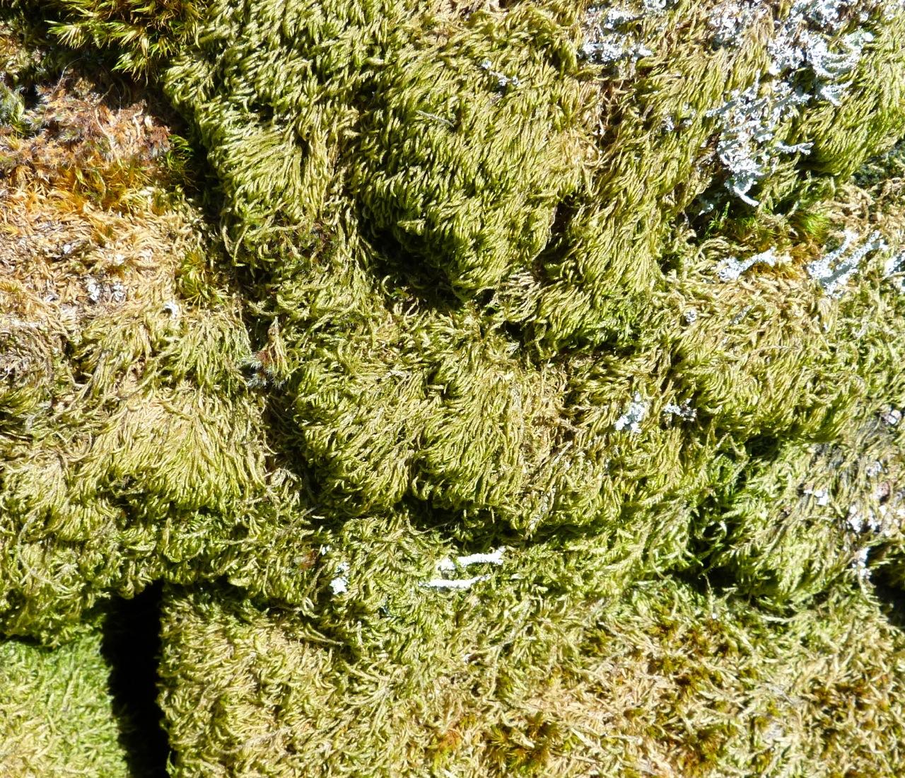 Dartmoor Rock Wall 6