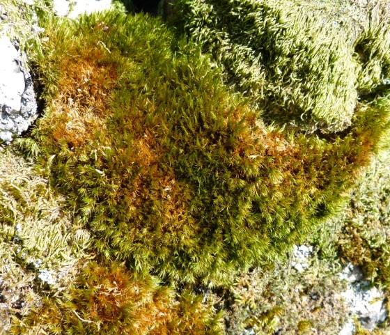 Dartmoor Rock Wall 7