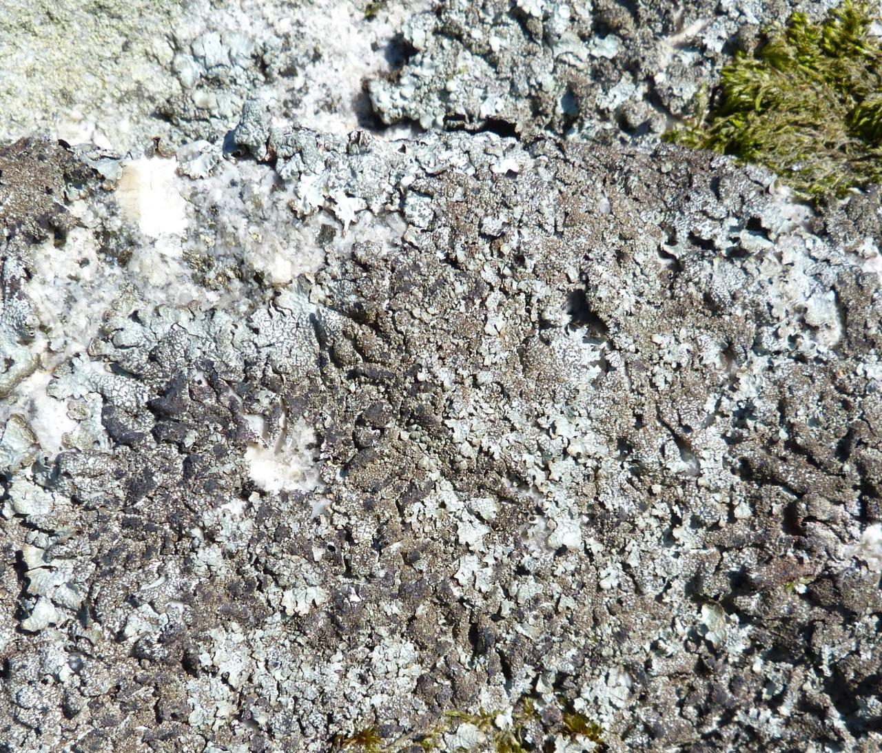 Dartmoor Rock Wall 8
