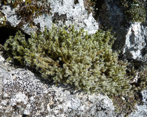 Dartmoor Rock Wall 9