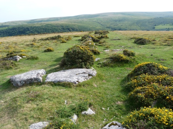 Dartmoor - Dartmeet Walk 15