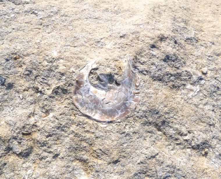 Portland Bill, Dorset - Rocks & Fossils 4