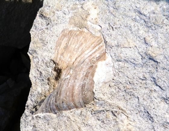 Portland Bill, Dorset - Rocks & Fossils 5