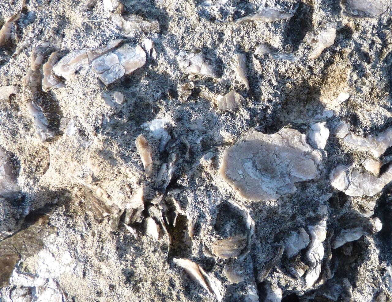 Portland Bill, Dorset - Rocks & Fossils 7
