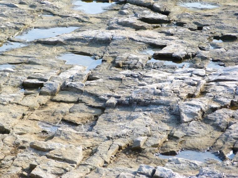 Portland Bill, Dorset - Rocks & Fossils