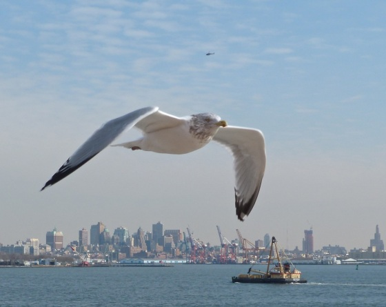 NYC Transport - Dredger (+ Gull)