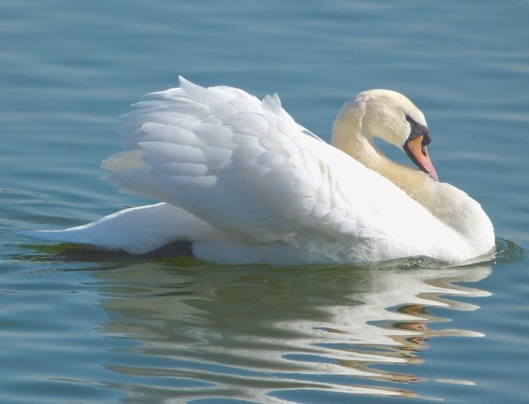 Swan NYC 10