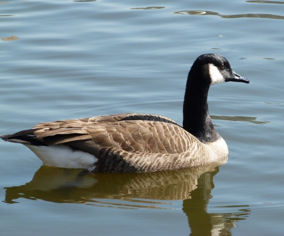 Canada Goose NYC 1