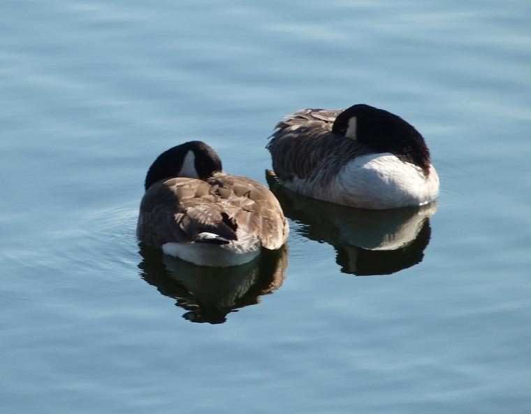 Canada Goose NYC 2