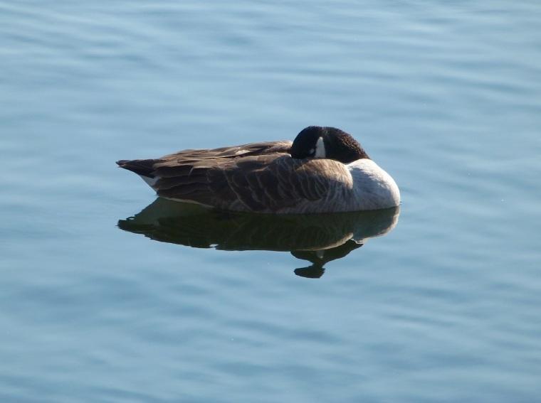 Canada Goose NYC 3