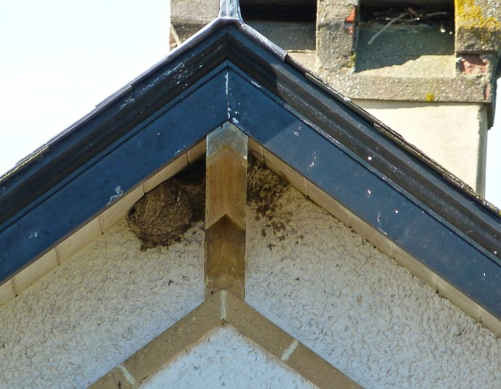 Martins' Nest Totnell 4.14