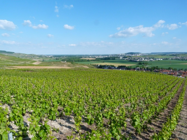 Champagne Vineyards above Cumières 1