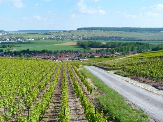 Champagne Vineyards above Cumières 2