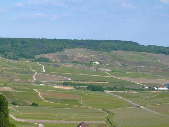 Champagne Vineyards above Cumières 4