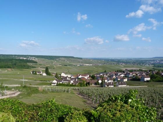 Champagne Vineyards above Cumières 5