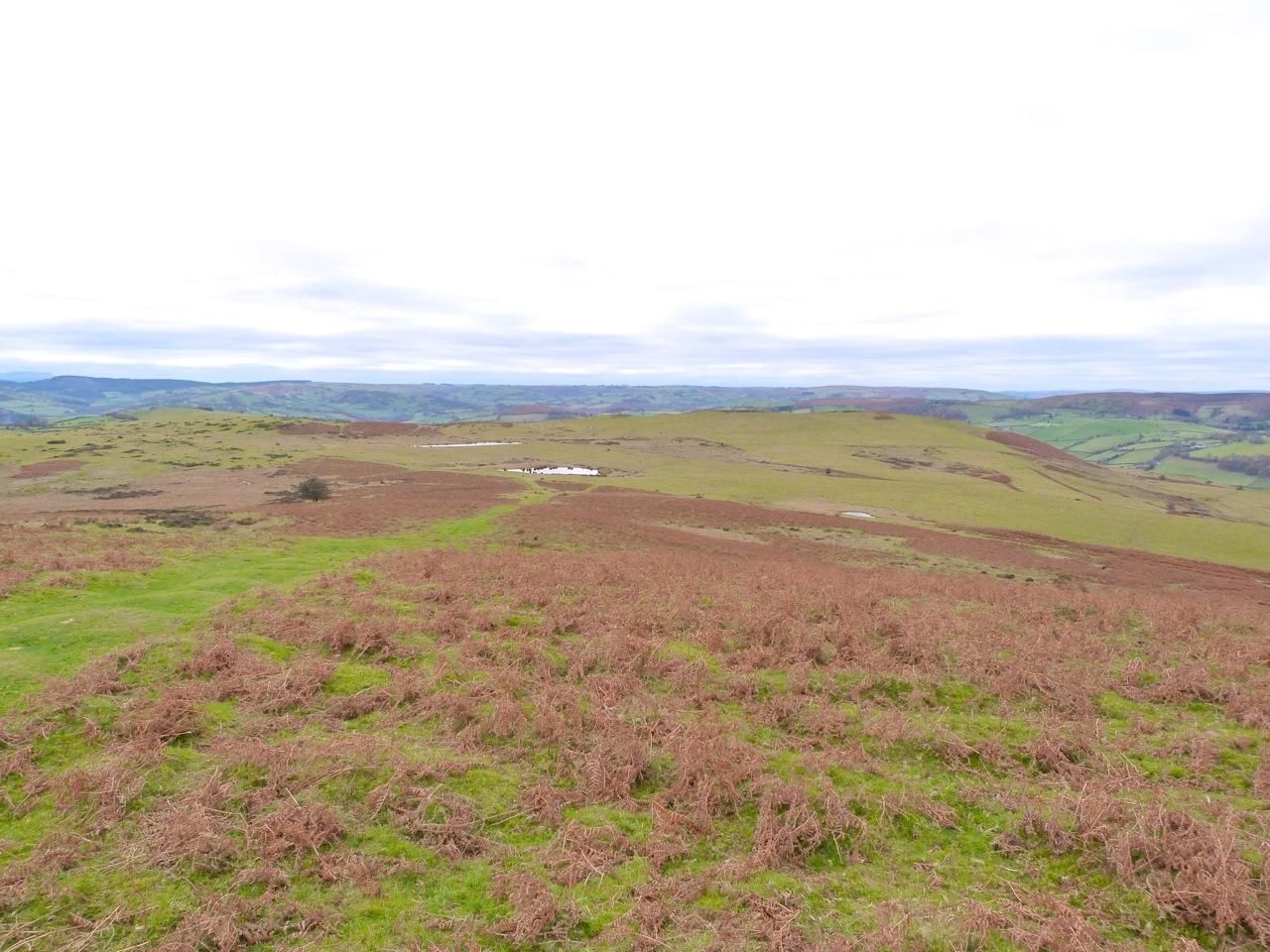 The Begwyns - Trig Point view W