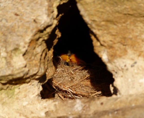 Sparrow Nest Totnell 2