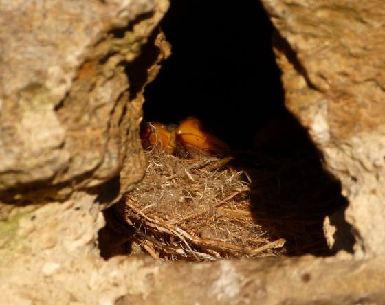 Sparrow Nest Totnell 3