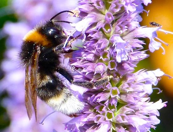 Summer Bees Dorset 1