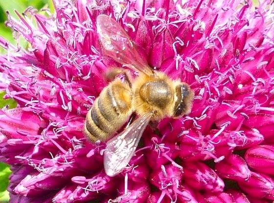 Summer Bees Dorset 10