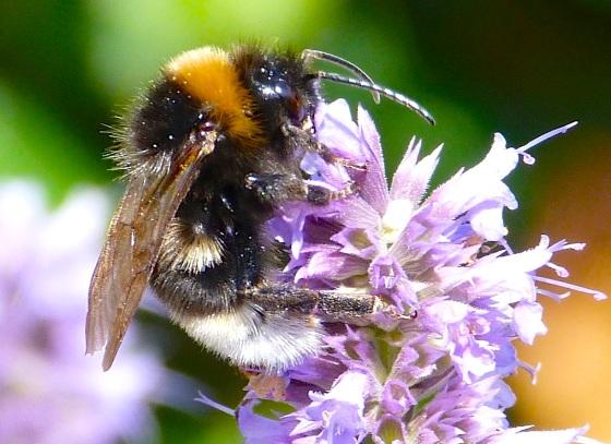 Summer Bees Dorset 2