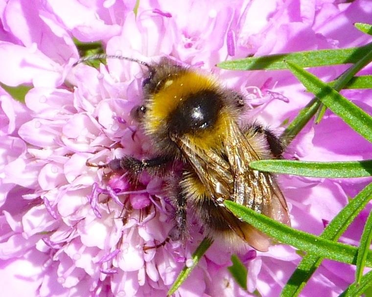 Summer Bees Dorset 3