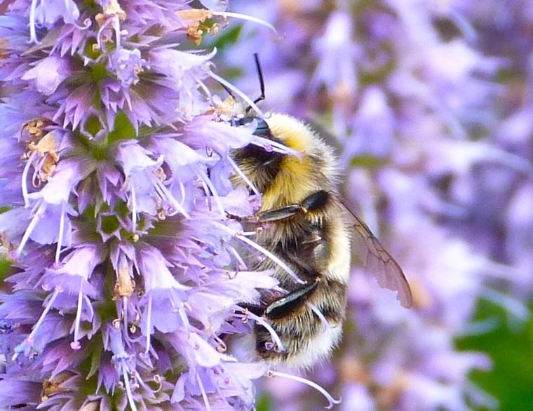 Summer Bees Dorset 4
