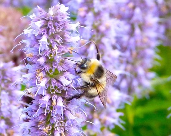 Summer Bees Dorset 5