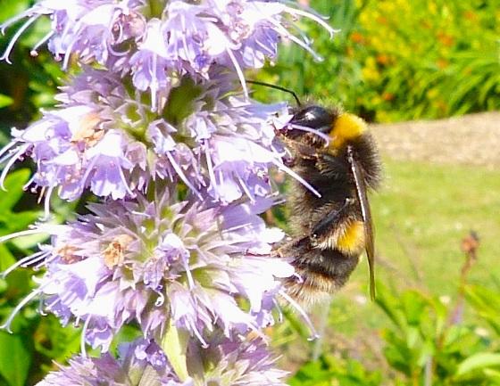 Summer Bees Dorset 6