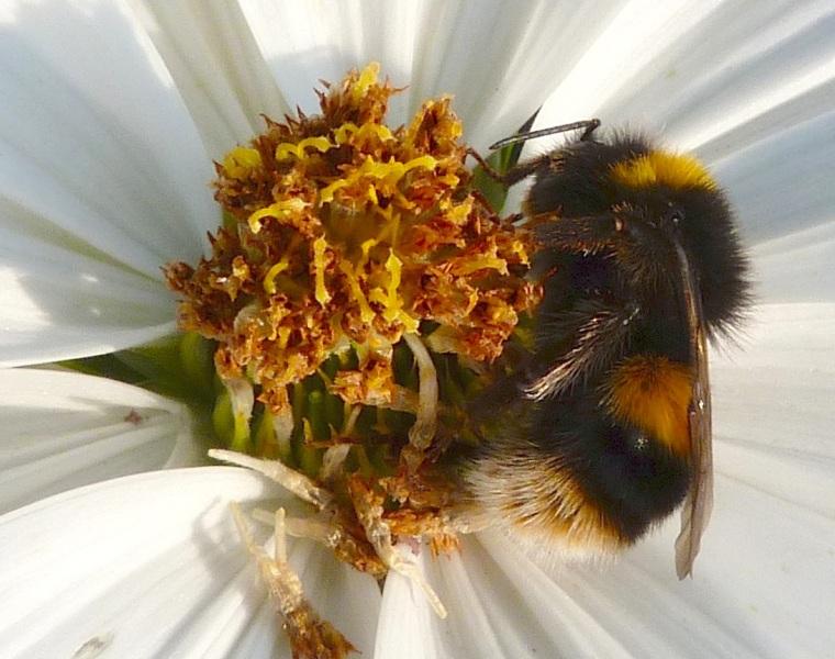 Summer Bees Dorset 8