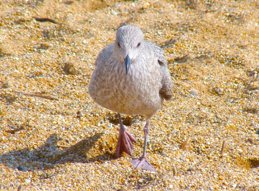 Gulls West Bay Beach 1