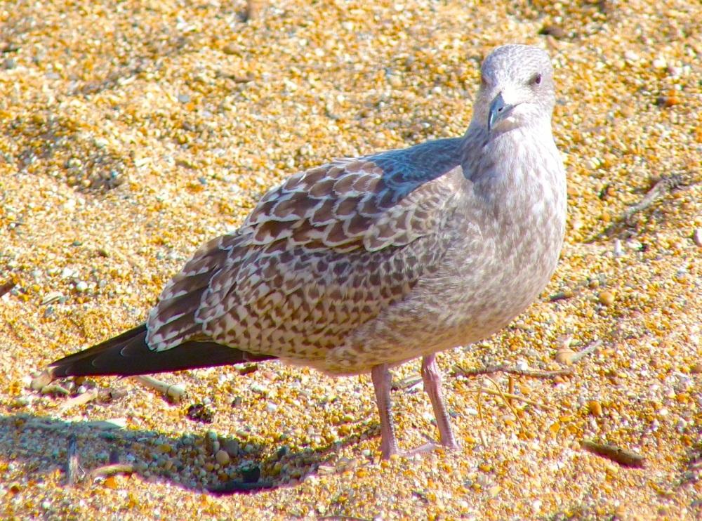 Gulls West Bay Beach 10