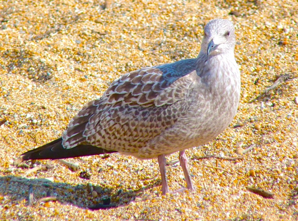 Gulls West Bay Beach 10