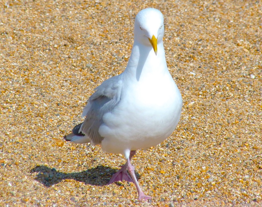 Gulls West Bay Beach 2
