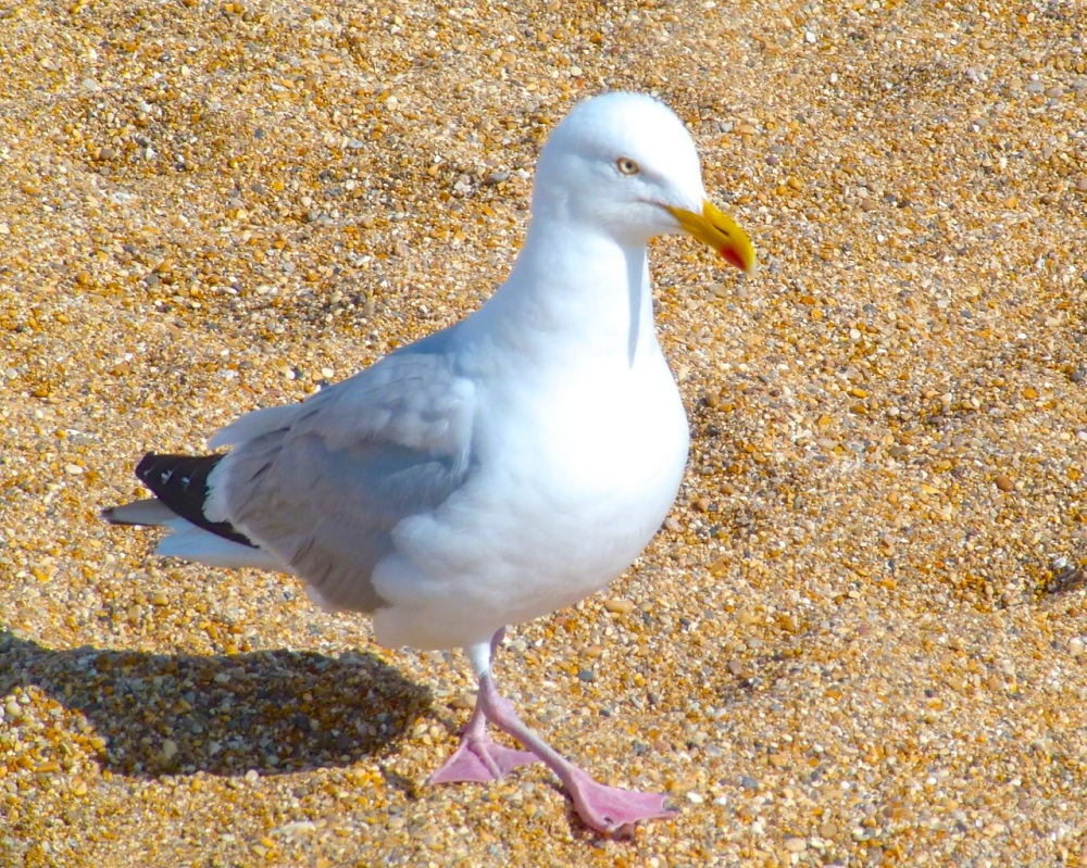 Gulls West Bay Beach 4