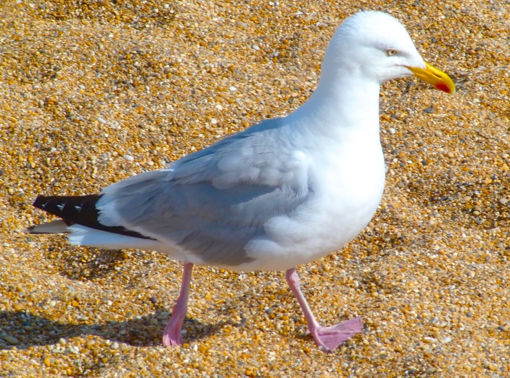 Gulls West Bay Beach 5