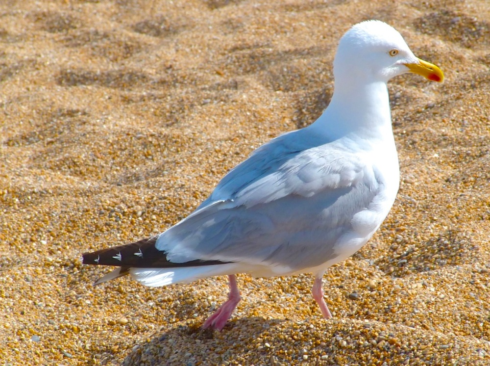 Gulls West Bay Beach 6