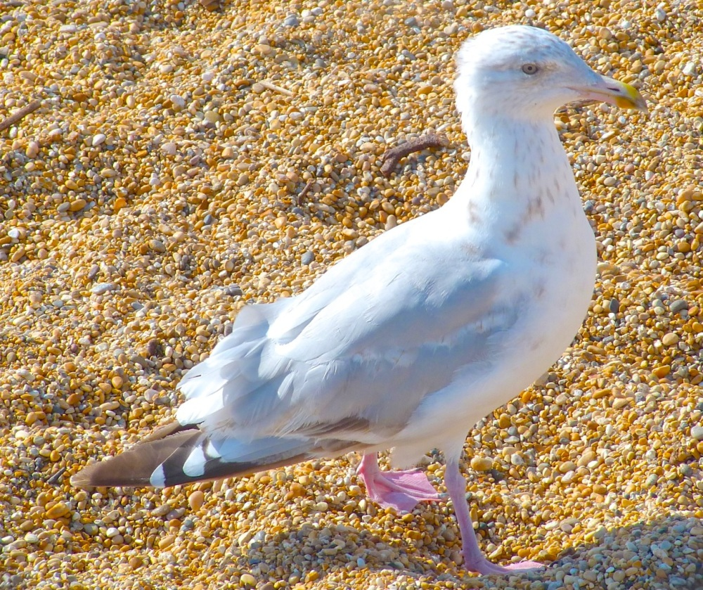 Gulls West Bay Beach 7
