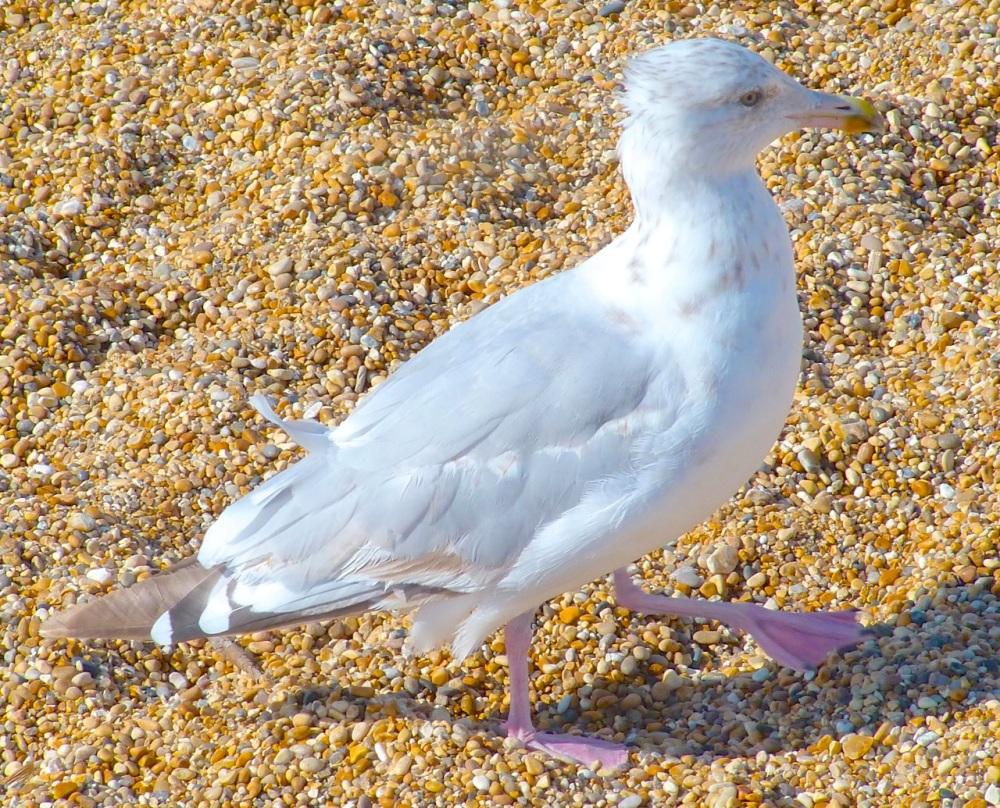 Gulls West Bay Beach 8