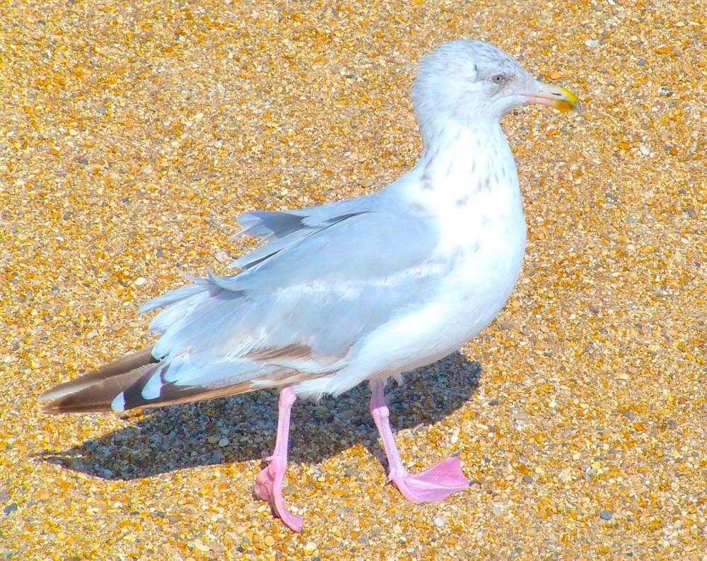Gulls West Bay Beach 9