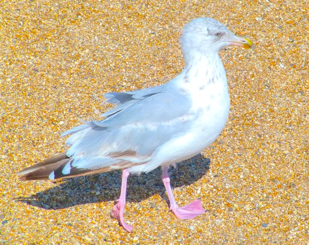 Gulls West Bay Beach 9