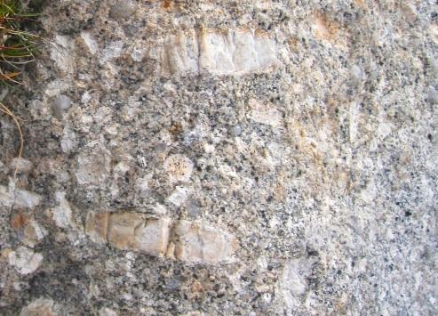Hound Tor, Dartmoor. Fossils? No, Megacrysts