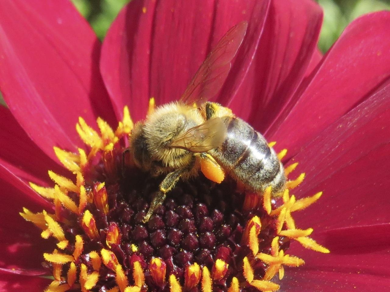 Honey Bees – ROLLING HARBOUR GALLERY