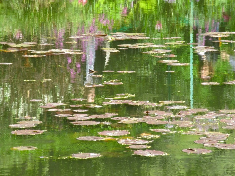 Impressions of Giverny - Lily Pond 01