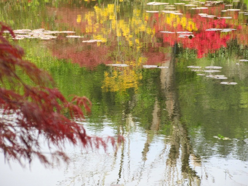 Impressions of Giverny - Lily Pond 04