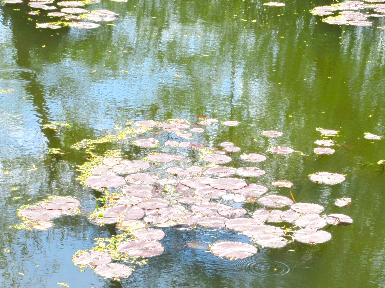 Impressions of Giverny - Lily Pond 10