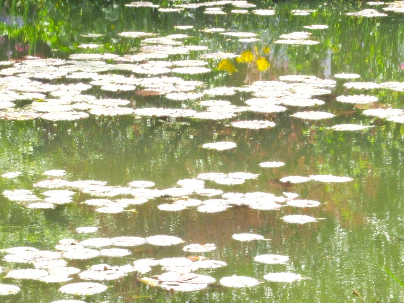 Impressions of Giverny - Lily Pond 13